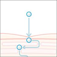 Qusomeイメージ図